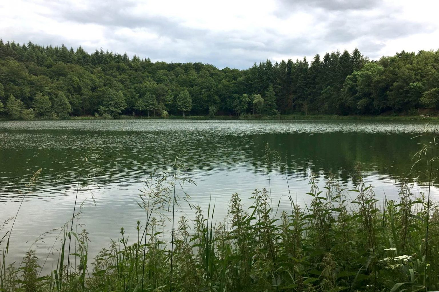 Holzmaar in Gillenfeld - Naturschutz